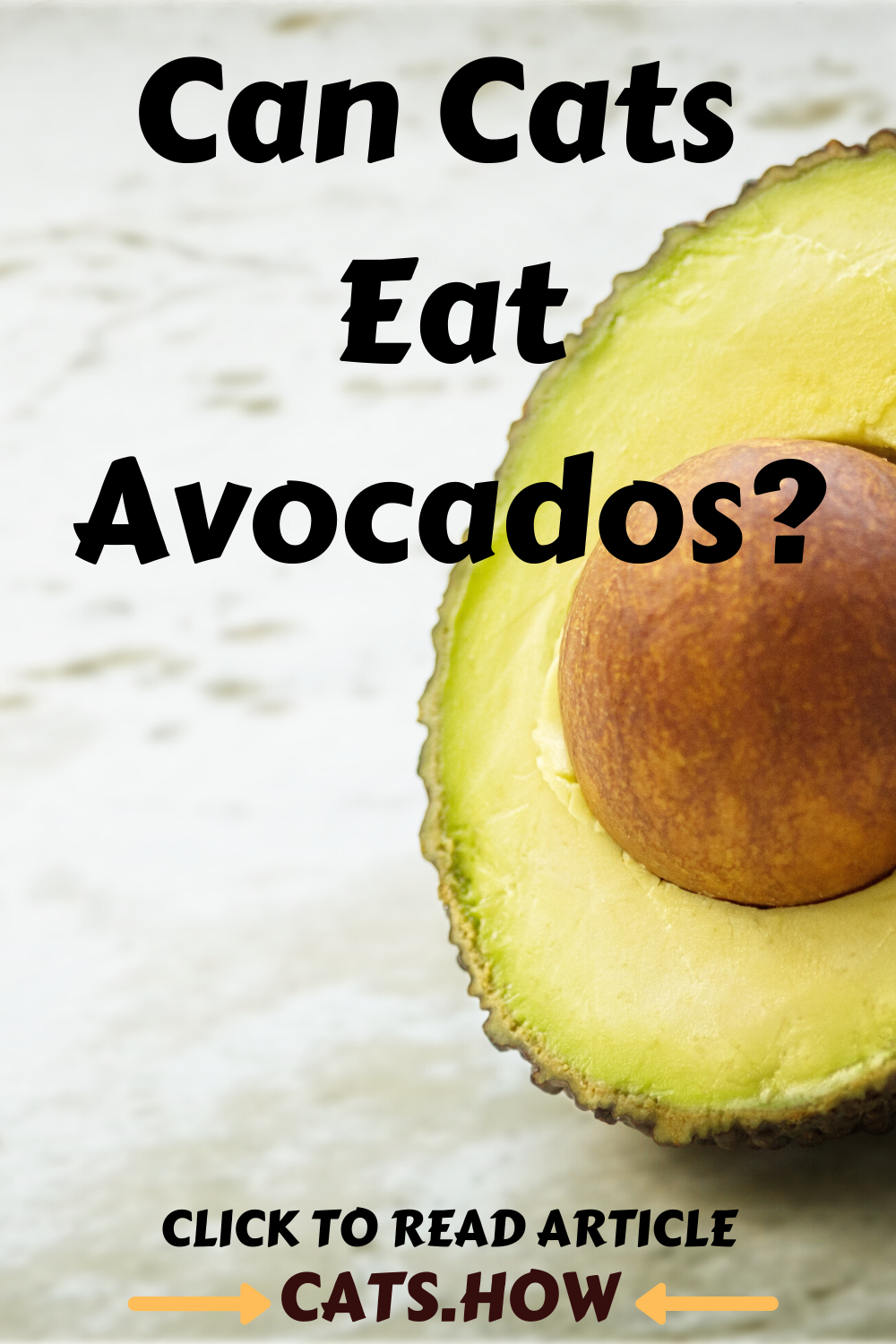 Can Cats Eat Avocados in 2020 Cat nutrition, Dog food
