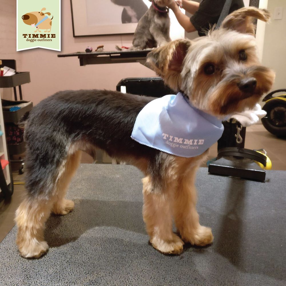 Jaws in his new do what a cutie!!! ) Grooming by