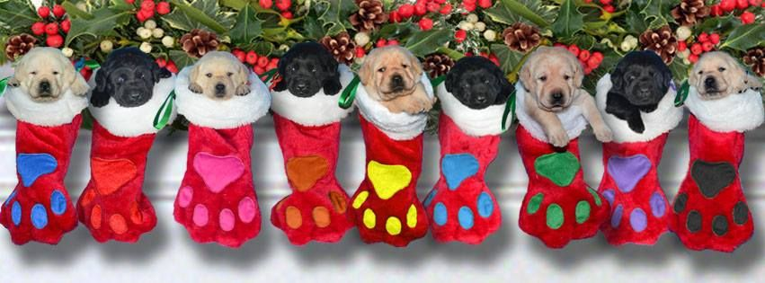Christmas Puppies Christmas Facebook Cover Christmas Fb Cover Photos Christmas Cover Photo Free christmas wallpaper with dogs