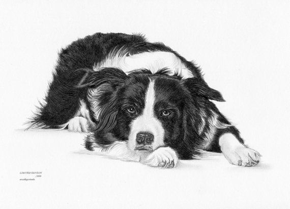 how to draw a collie face