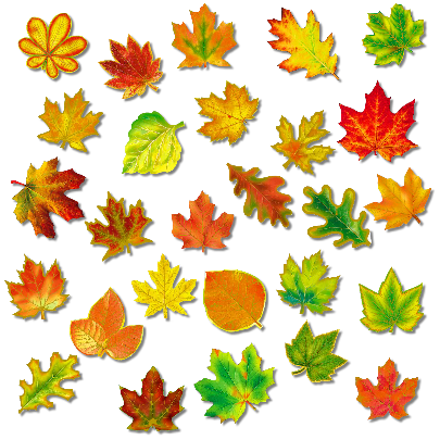 Картинки осенние листья для детей :: Карточки и картинки ...