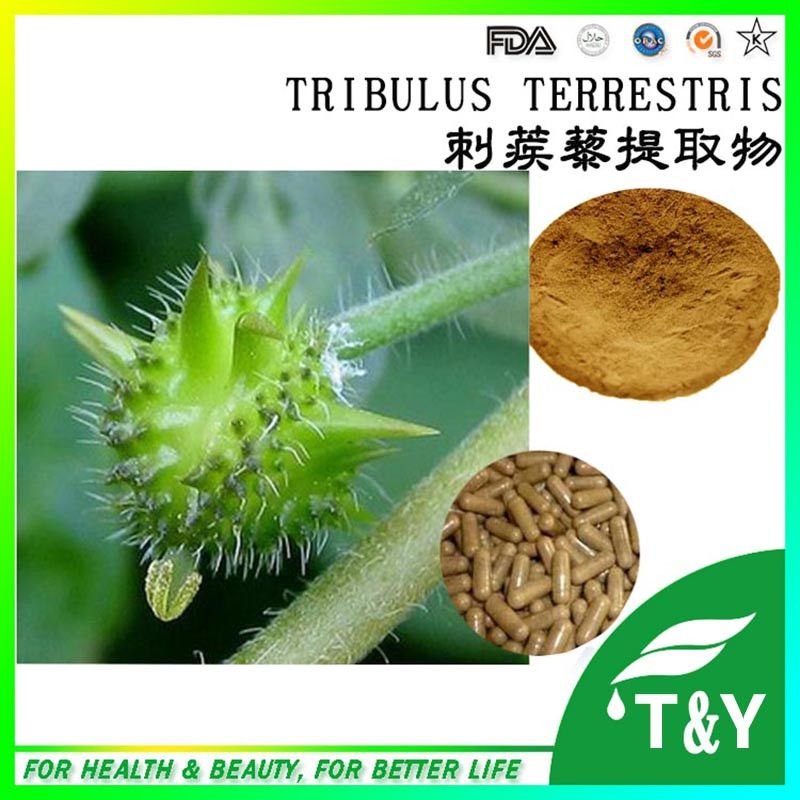 Factory Supply 100% Natural Tribulus Terrestris Extract Herbal Extract 900g