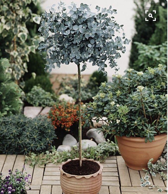Pin by Chrysta Bilton on Garden Pinterest Gardens