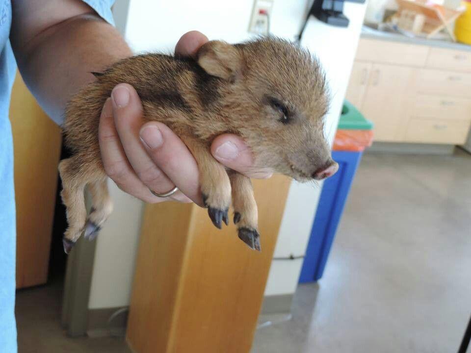 Cute baby animals D39931bb57232207f89b417d31612ea9