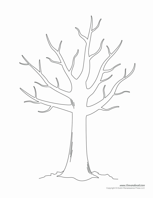 Fall Tree Coloring Sheets Lovely Tree Printable Template Ugyud Kaptanband Templat Daun Halaman Mewarnai Lembar Mewarnai