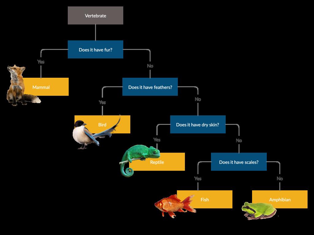 Dichotomous Key for Animals   Dichotomous key, Pen and