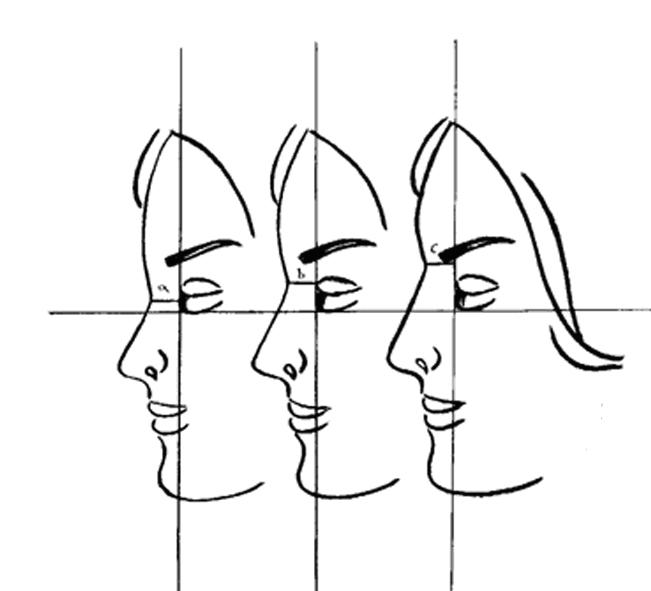 frankfort horizontal plane - Google 검색