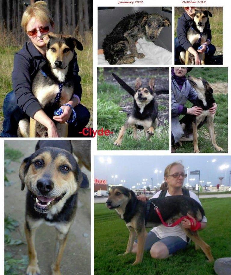 Clyde Sucht Ein Zuhause Hundeliebe Hundebilder Hunde