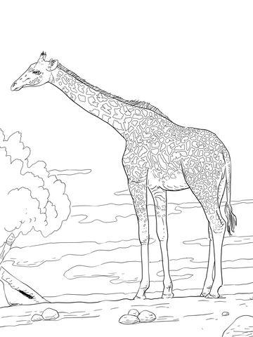 Jirafa de Rodesia Dibujo para colorear | animales | Pinterest ...