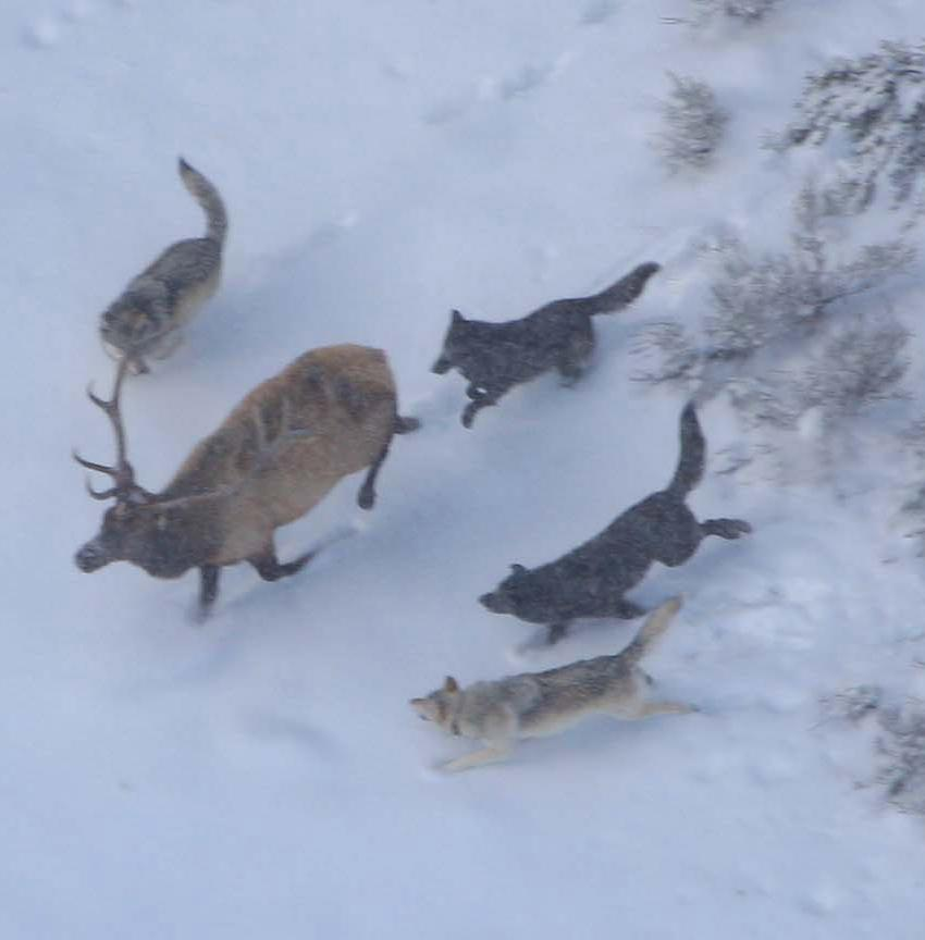 Pictures Of Kids Hunting Pack With Deer