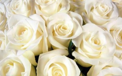 white roses thrill me every time.