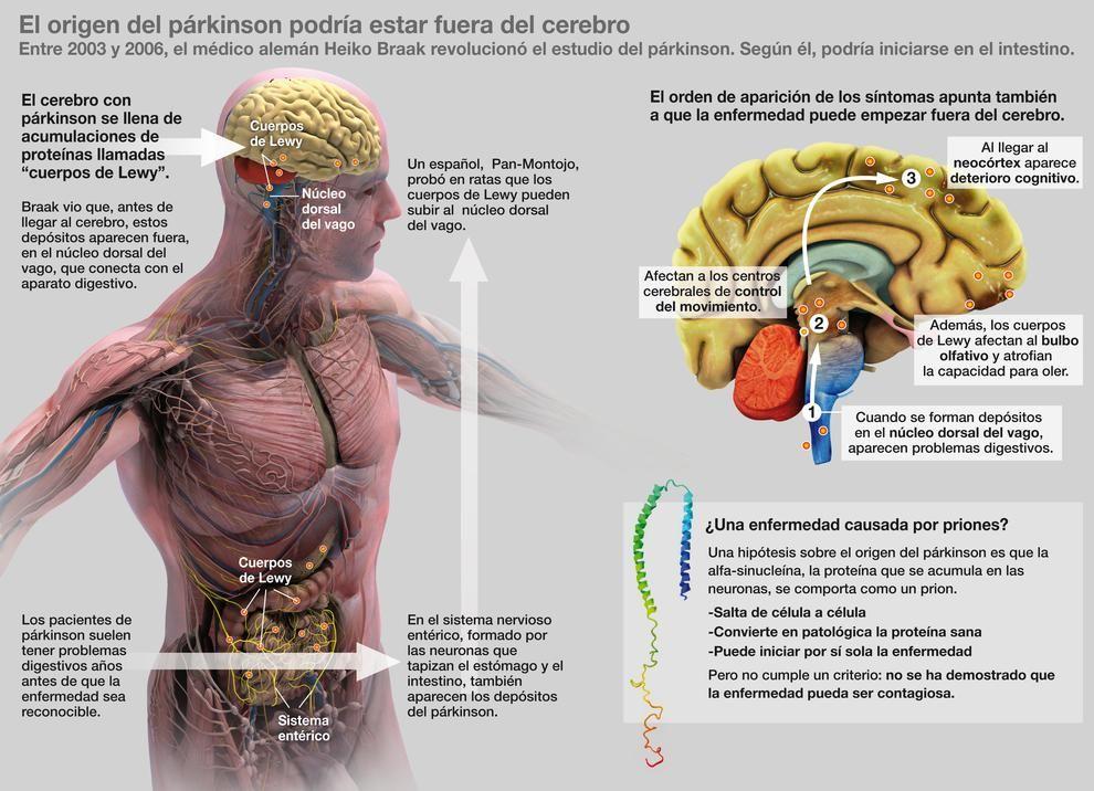 Interesante para la clase de Anatomía y Fisiología. Vía FaceBook de ...