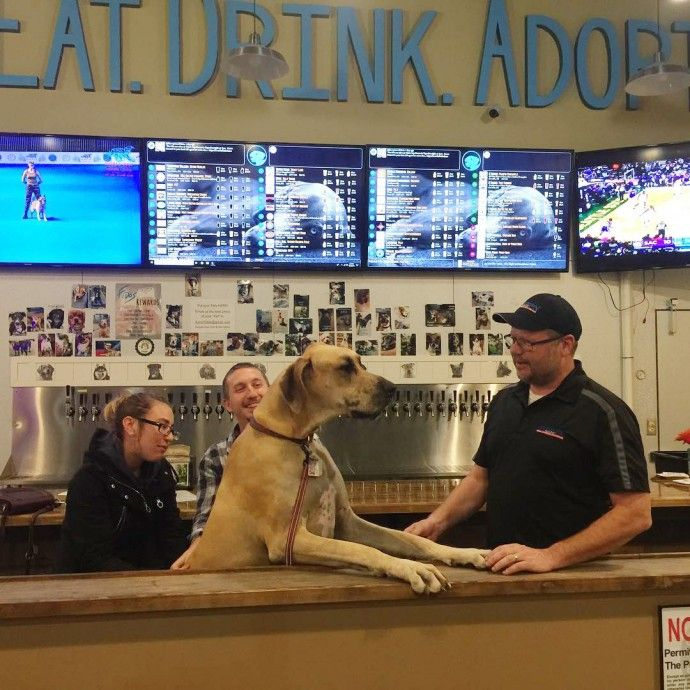 Fido S Is The World S First Craft Beer Tap House And Foster Home For Adoptable Dogs In 2020 Foster Dog Dogs Up For Adoption Dog Adoption