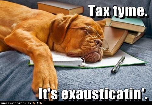Accountant puppy
