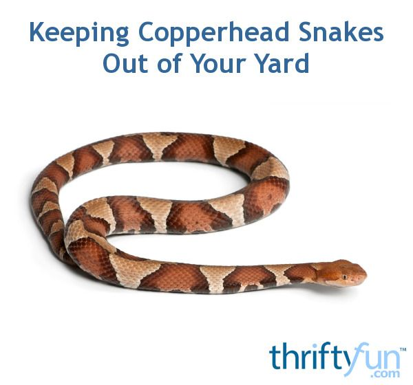 Keeping Copperhead Snakes Out Of Your Yard Snake Repellant Plants Snake Repellant Snake