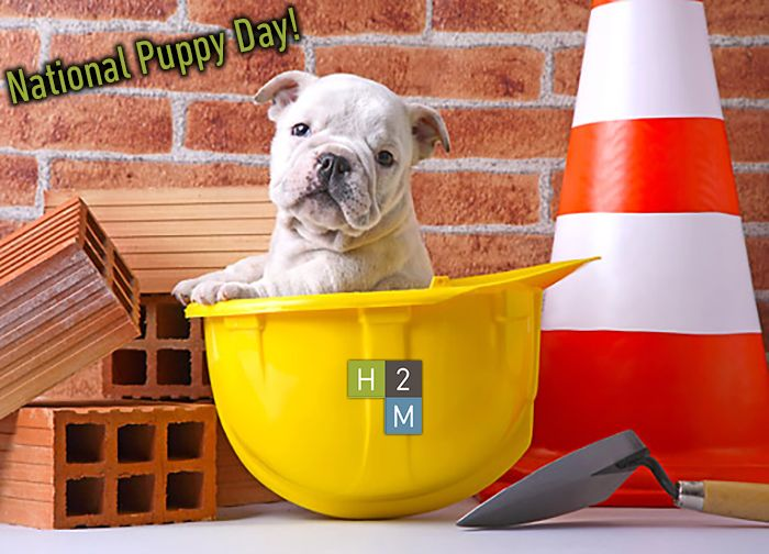 Happy National Puppy Day It Looks Like This Cute Pup Is One Step Closer To Joining The H2m Team Bulldog Puppies Puppy Sitting Puppies