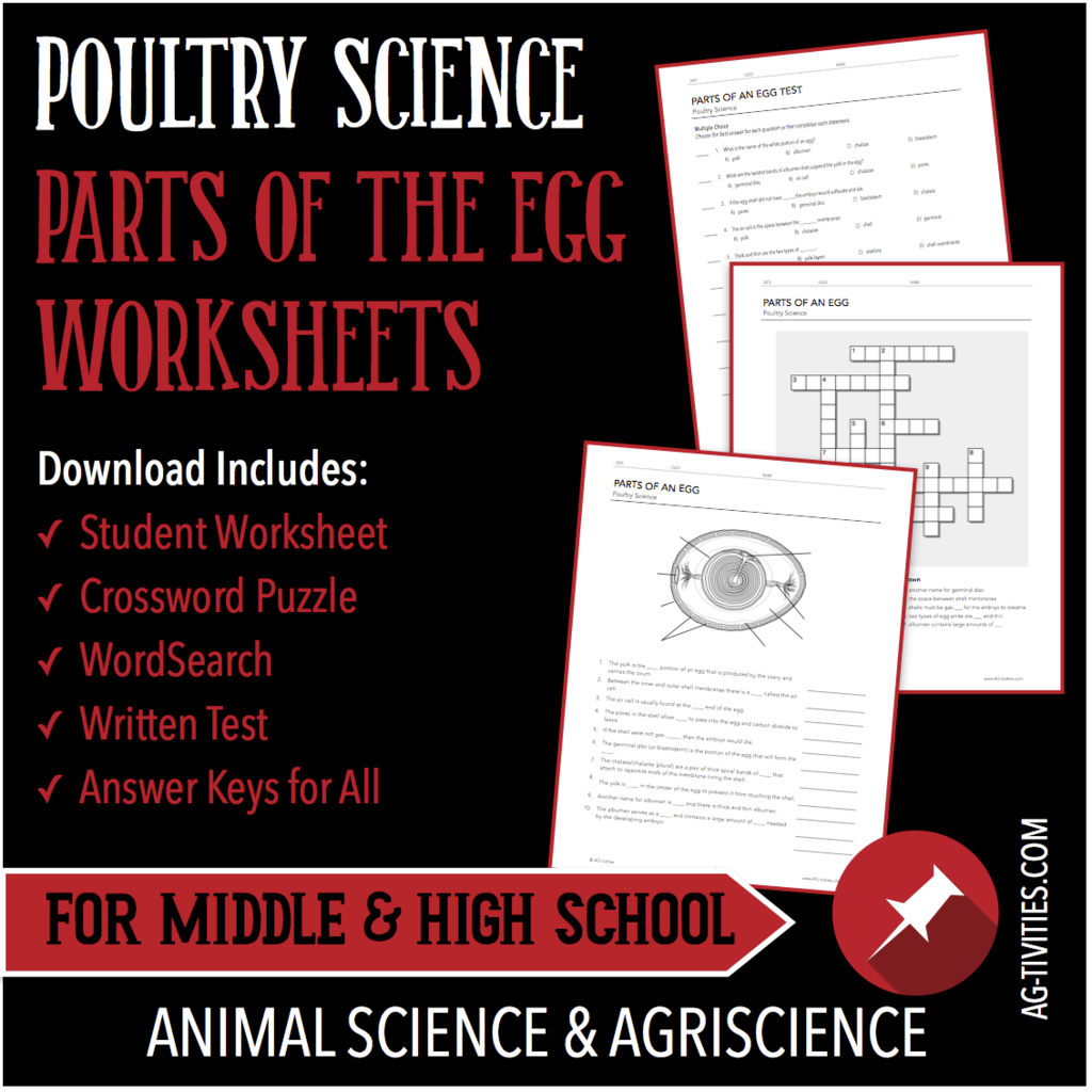 Parts Of The Egg Poultry Science