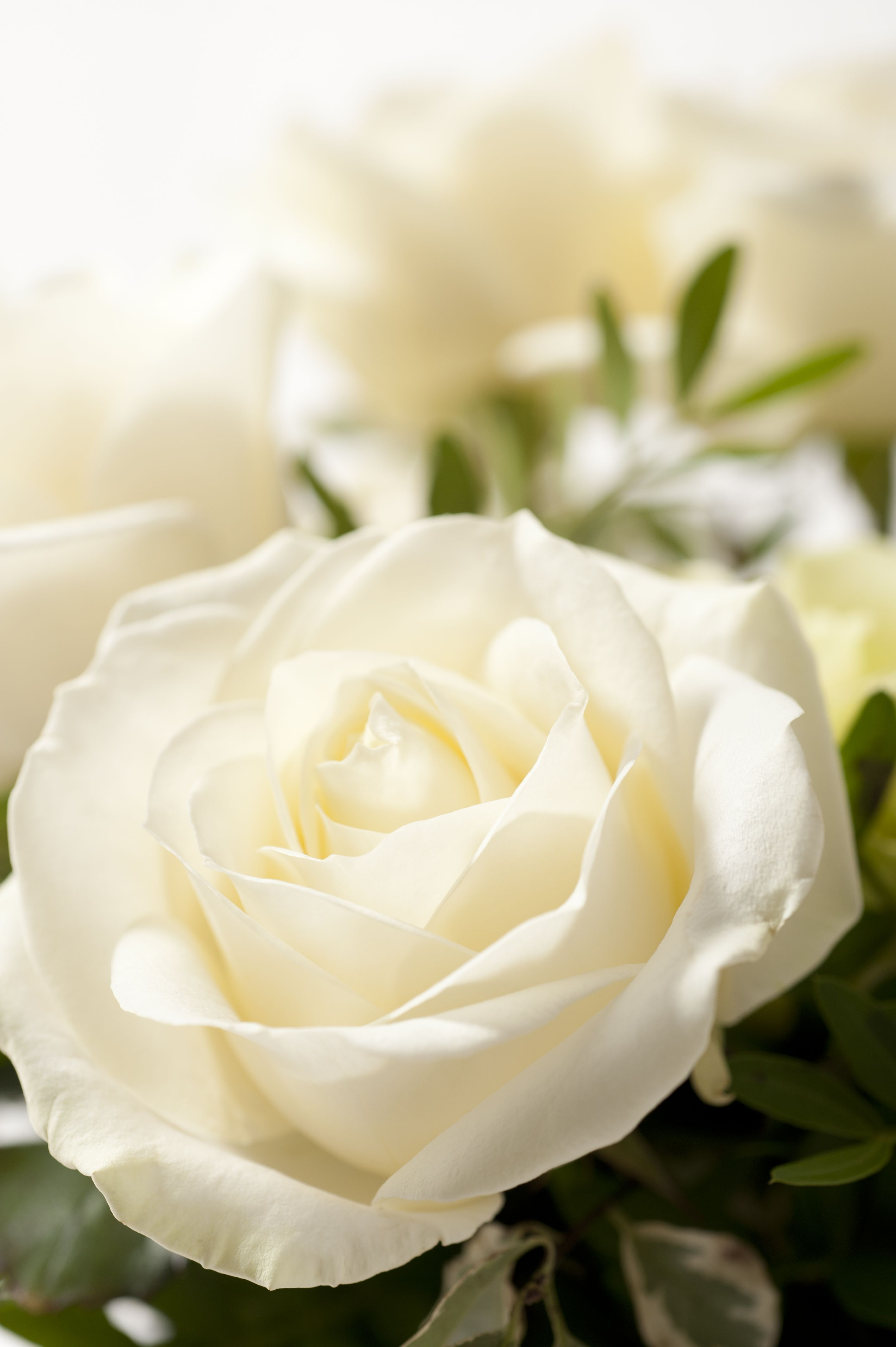 Rose Blanche Bouquet Cocon Interflora France Roses