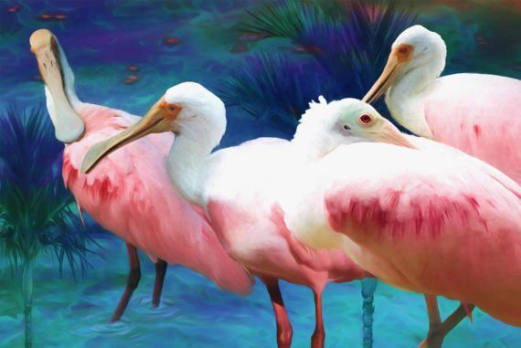 Roseate Spoonbills Tropical Birds Canvas Art Pink Birds