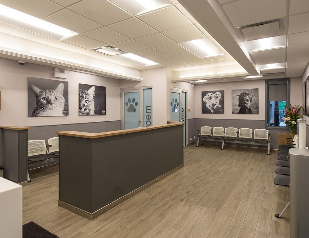 Blum Animal Hospital Veterinary Hospital Architecture Hospital Interior Design Hospital Design Clinic Interior Design