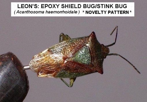 Leon S Shield Bug Originated And Tied By Leon Guthrie Shield