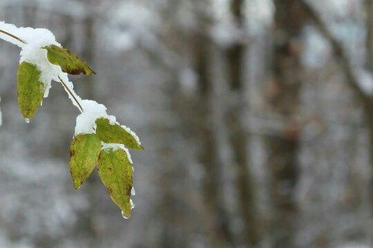 Neve sui colli euganei
