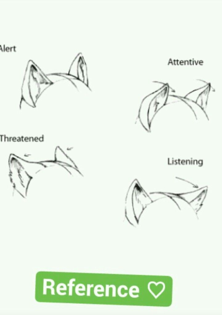 Wolf Ears Drawing : drawing, Language, Anime, Drawings, Tutorials,, Animal, Drawings,, Reference, Poses