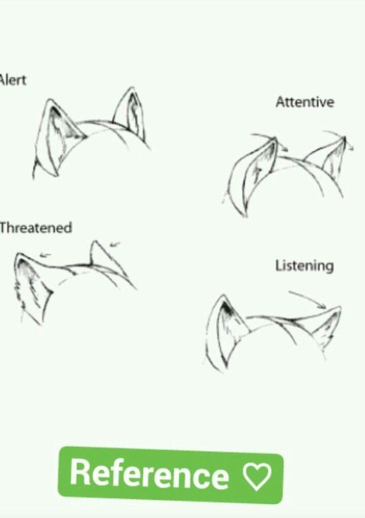 Wolf Body Language Ears Animal Drawings Wolf Drawing Anime Drawings Tutorials