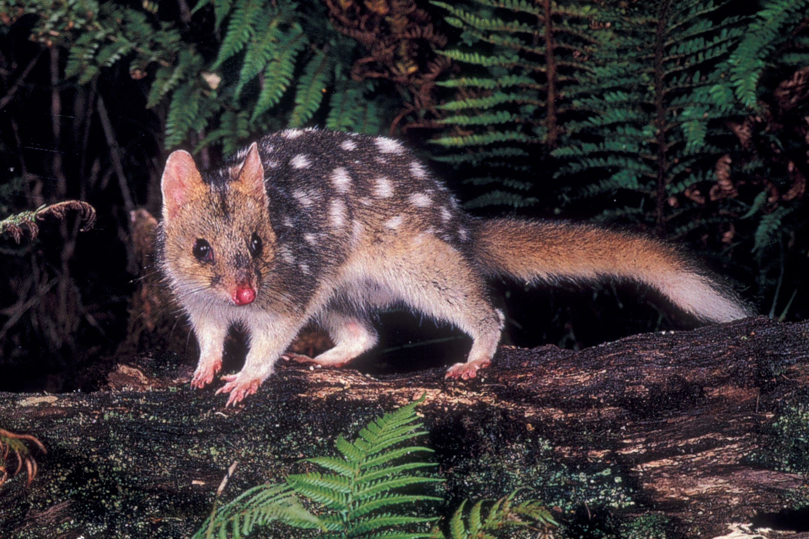Rare Animals and Their Names Wildlife Save the Tarkine