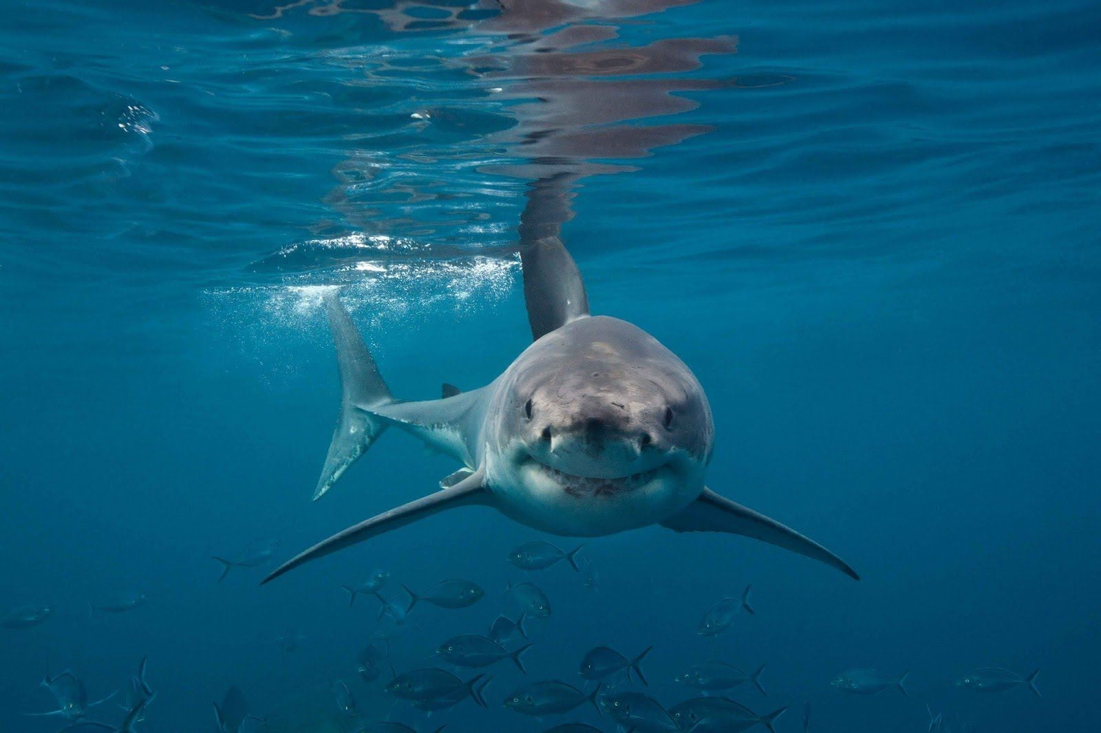 Australia's Deadliest Shark Coast Attacks Full Documentary