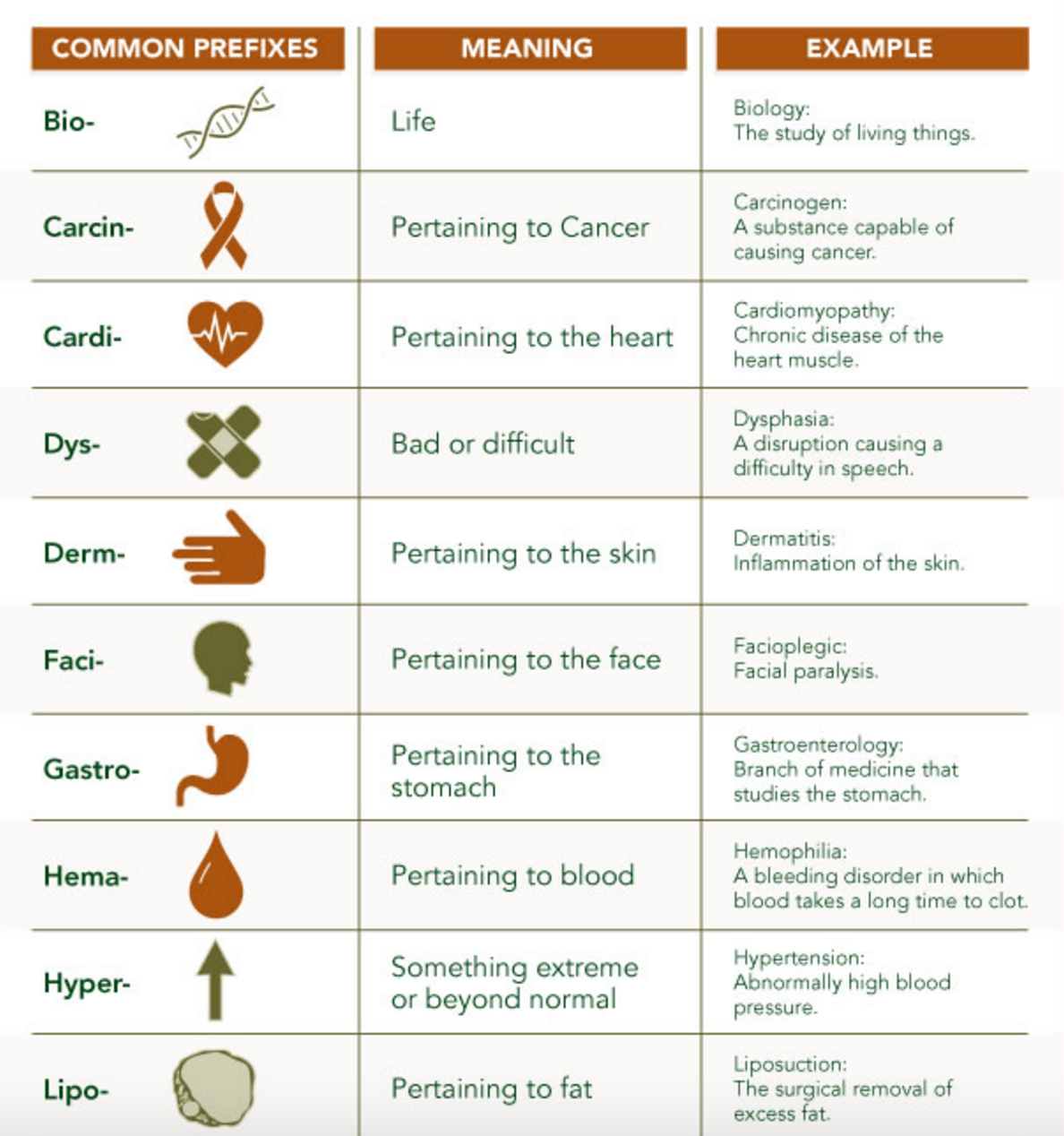 Memorize Medical Terms The Easy Way