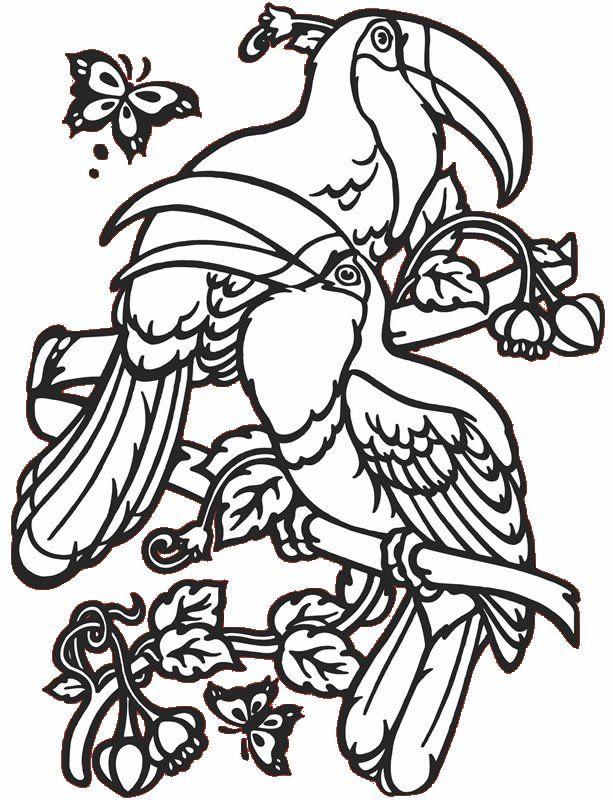 free coloring pages tropical birds-#1