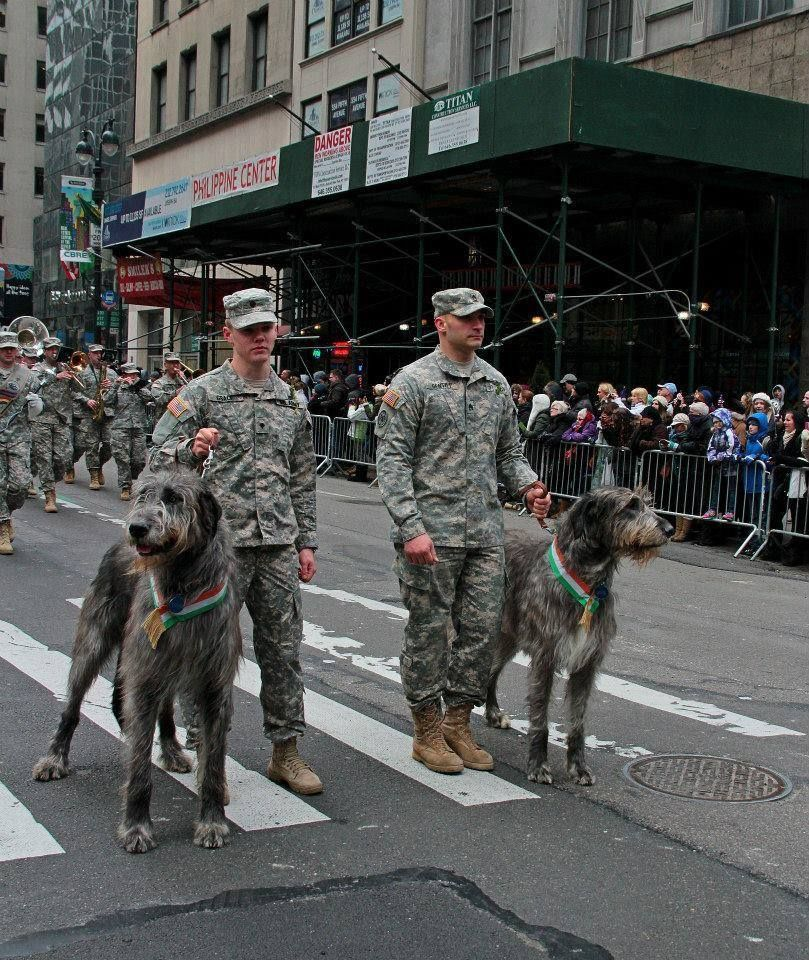 Men And Their Dogs — AKC Family Dog Irish Wolfhounds