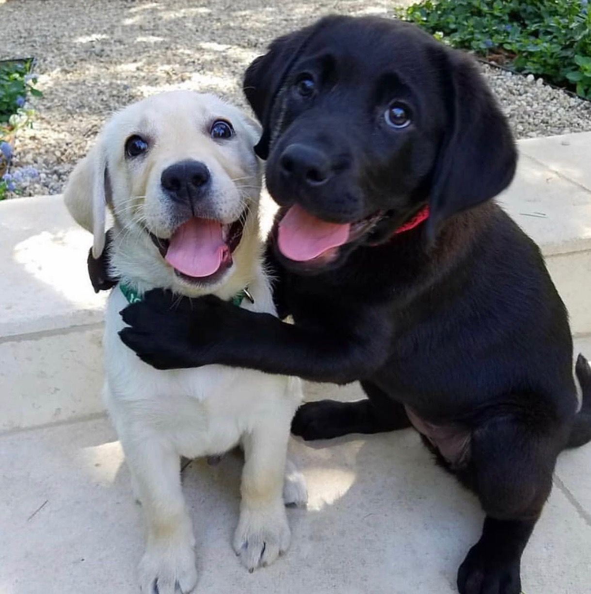 Pin By Penny Gilchrist On Cute Puppies Cute Baby Animals Cute