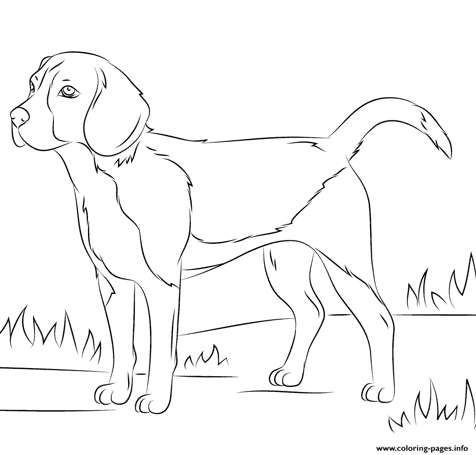 Realistic Dog Coloring Pages Printable Dog Coloring Page Puppy Coloring Pages Beagle Colors