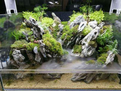 Amazing Aquascape Freshwater Gallery Ideas 68 | vivarium ...