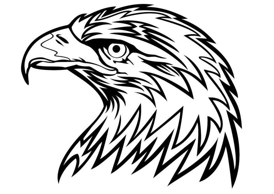 Malvorlage Adler   Ausmalbild 24672.   Ausmalen ...