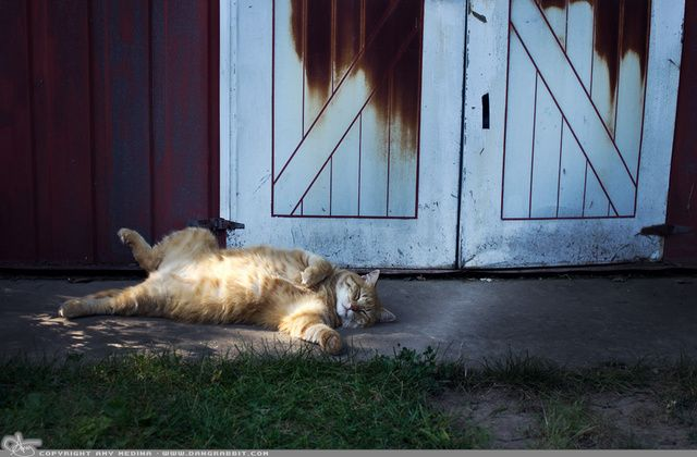 """Picture-A-Day (PAD n.1140) """"Happy Cat""""  ~Amy, DangRabbit Photography"""