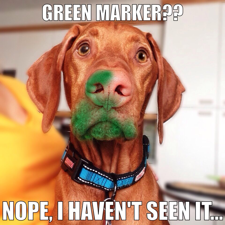 BUSTED Guilty Dogs PICTURES Markers Dog And Animal - 26 funny photos of guilty dogs