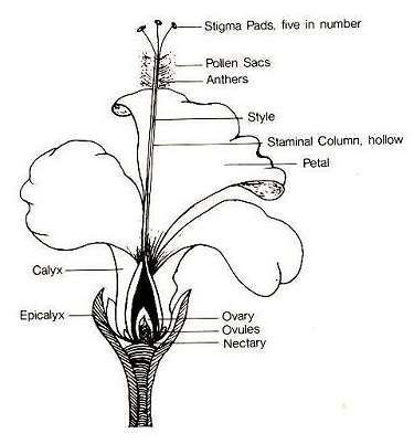 Plant Parts Flower Diagram With Images Parts Of A Flower