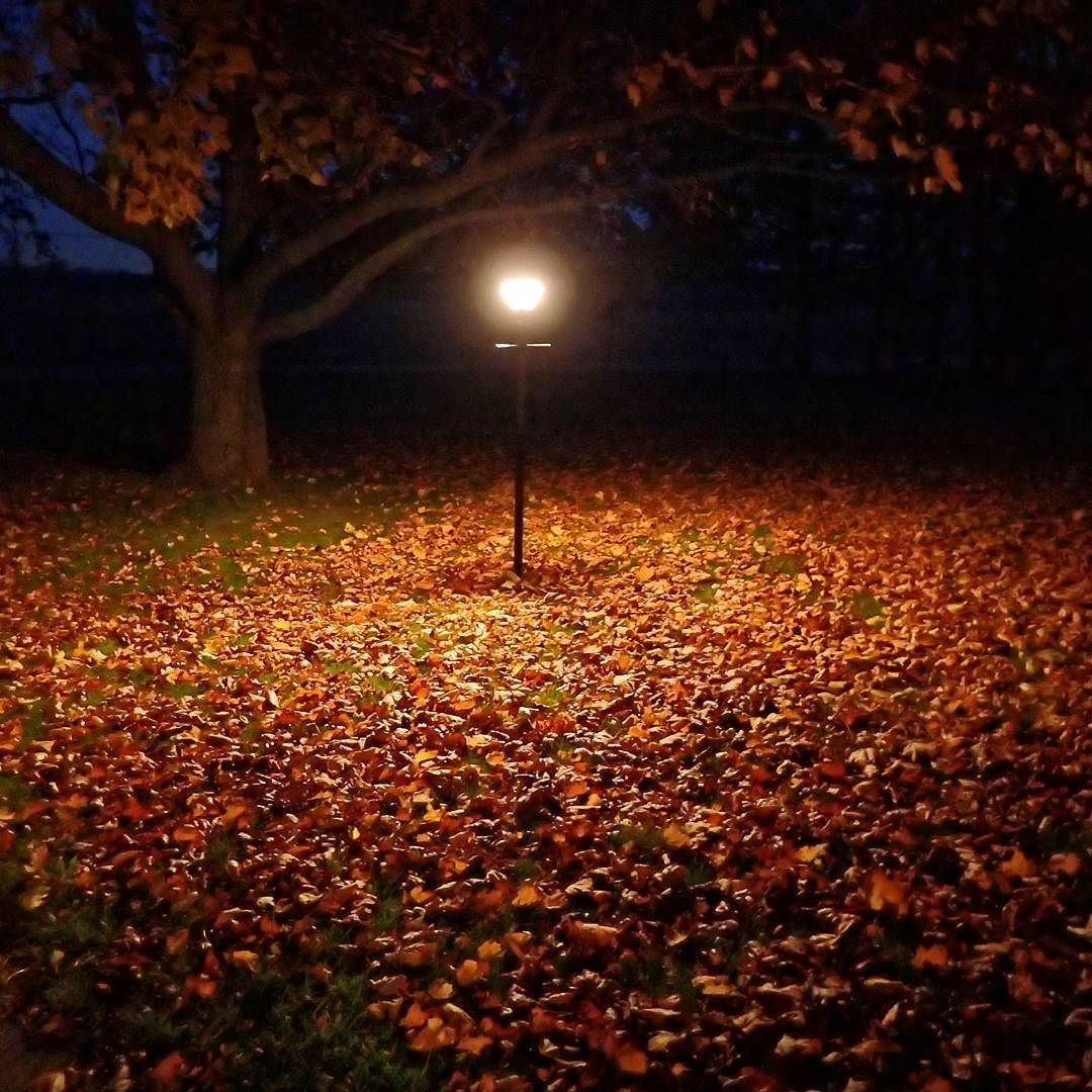 Yard Light And Leaves Photography Photo Scenic Beautiful Landscape Michigan Puremichigan Outdoors Travel Nat Outdoor Yard Lights The Great Outdoors