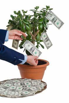 T to rastlina v dome priahuje peniaze ako magnet