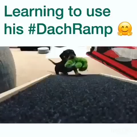 Dachshund Ramp Dach Ramp Dachramp Dog Ramp Dachshund Bad Ramp Bad