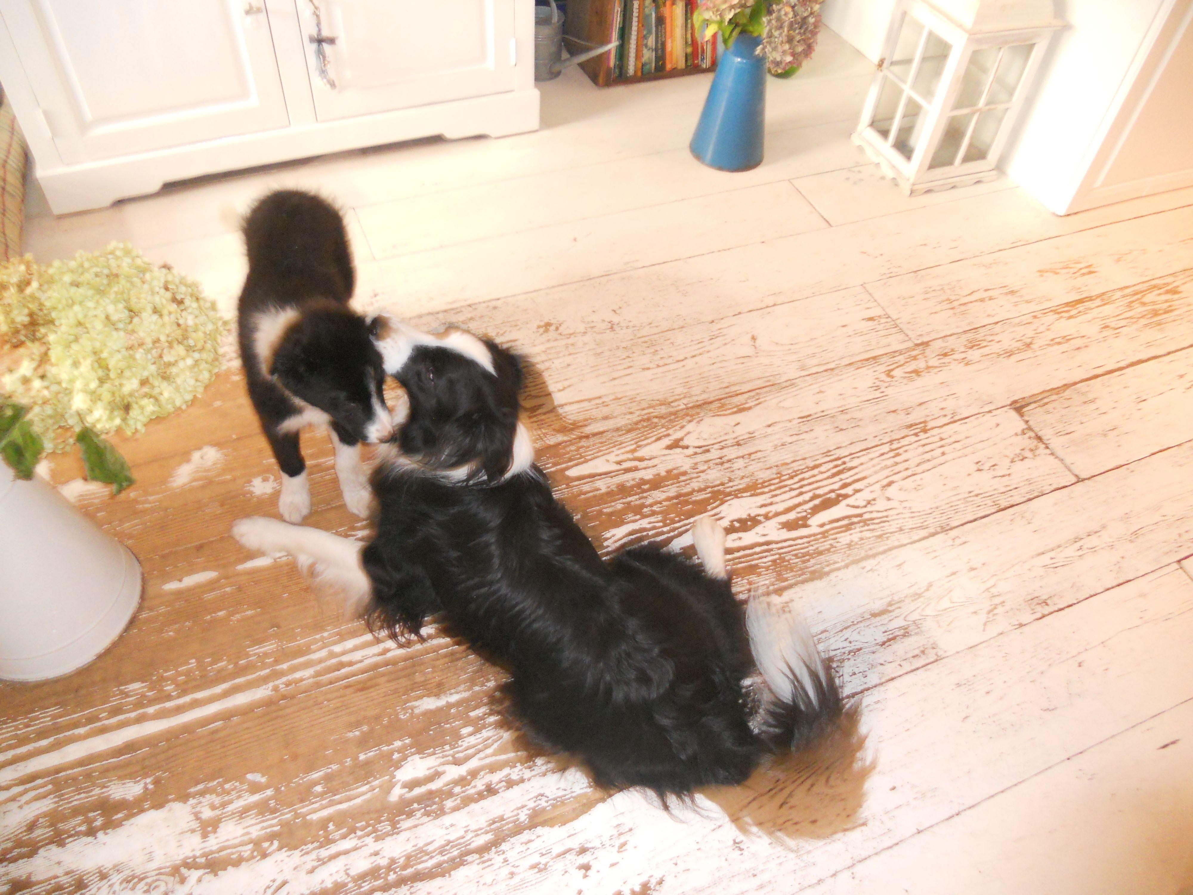 Puppy spelen!