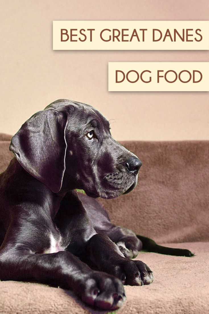 Top 5 Best Dog Foods For Great Danes 2017 Buyer S Guide Quinny