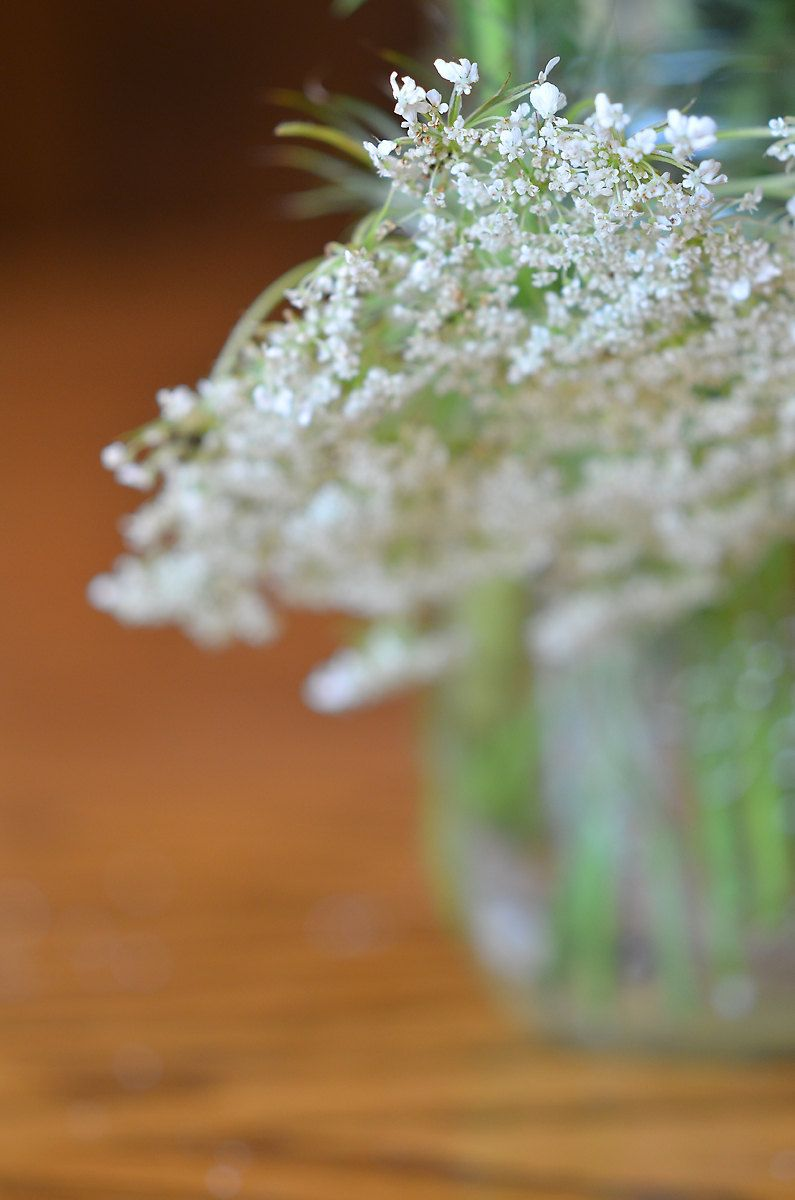 Queen Ann's Lace Flower Photograph, Still Life Flower Photography, Floral…