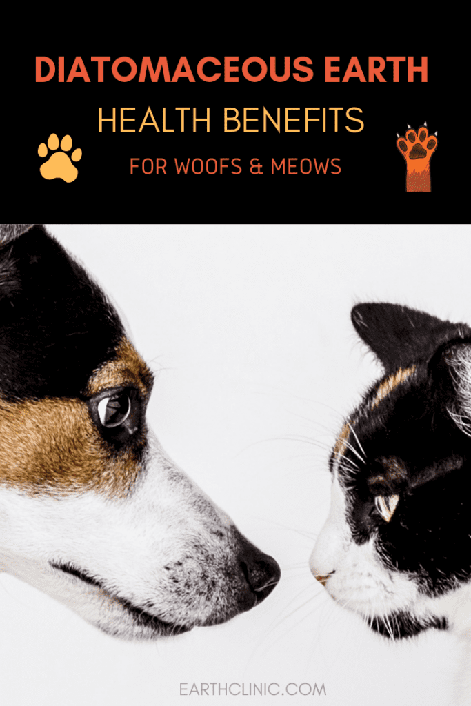 How to Use Diatomaceous Earth on Your Pet Diatomaceous