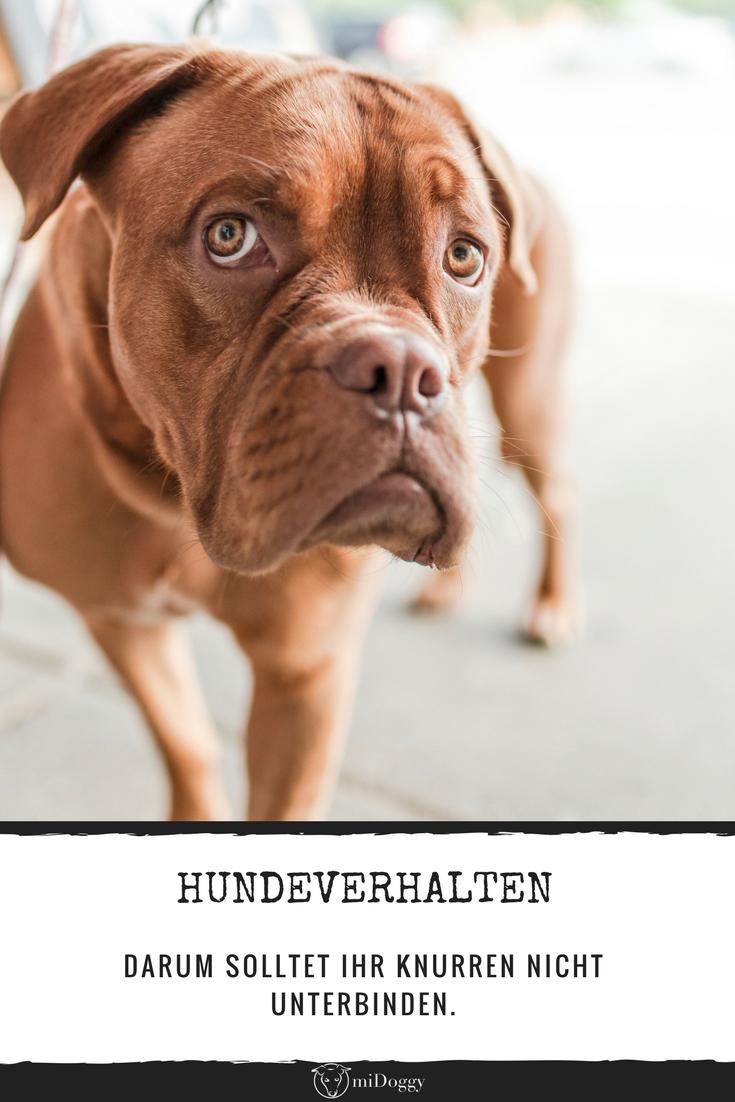 Knurren Ausdrucklich Erwunscht Hundeverhalten Hunde Und Begleithund