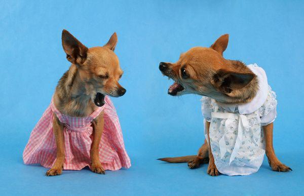 The 10 Most Talkative Dog Breeds Dog Breeds Cute Animals Dog