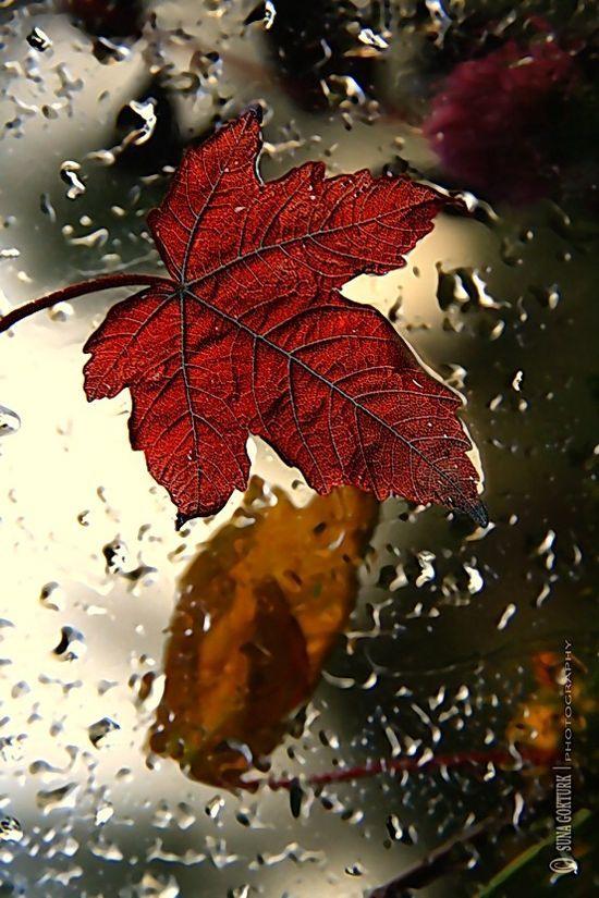 Via Crescentmoon06 Share Moments Autumn Rain Rain Wallpapers Autumn Leaves